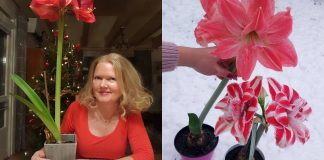Комнатный цветок, который поможет вам быстрее выйти замуж