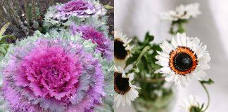 11 неприхотливых и красивых цветов для сада