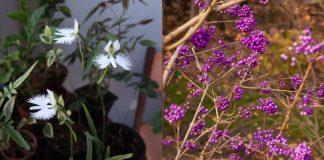9 необычных цветов