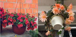 7 розовых цветов для кашпо