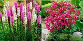 10 цветов, которые могут пережить самую зверскую летнюю жару