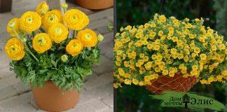 7 жёлтых как солнце цветов для кашпо