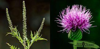 12 самых распространенных видов сорняков