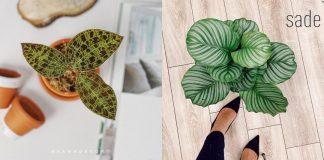 5 редких комнатных растений